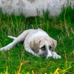 Βόλβη-Ξεκινά το πρόγραμμα περίθαλψης αδέσποτων ζώων