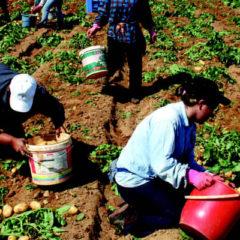 ΜΚΟ… «προμοτάρουν» φθηνή απασχόληση εργατών γεωργίας και κτηνοτροφίας από Πακιστάν και Μπαγκλαντές