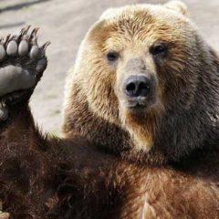 Καστοριά: Αρκούδα με τα δύο μικρά της έκανε βόλτα στην άδεια πόλη (Βίντεο)